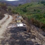 Detenciones incendios forestales