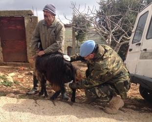 El veterinario tratando a una cabra