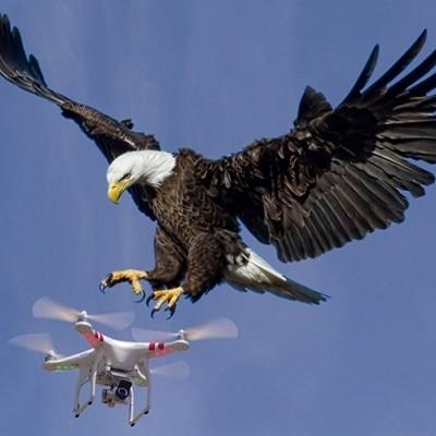 Eagles_drone squared